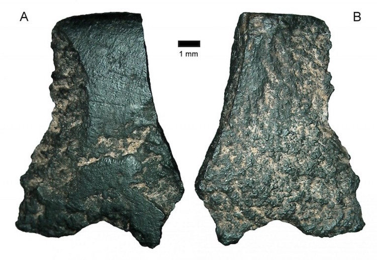 World's oldest axe fragment, seen here under a microscope, is the size of a thumbnail. CREDIT – Australian Archaeology.