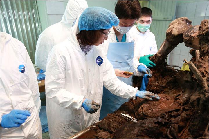 39.000 Yıllık Mamutu Klonlama Tartışmaları