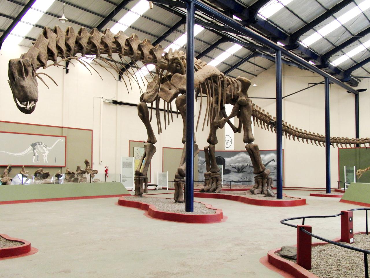 barcelona'da sauropod fosili