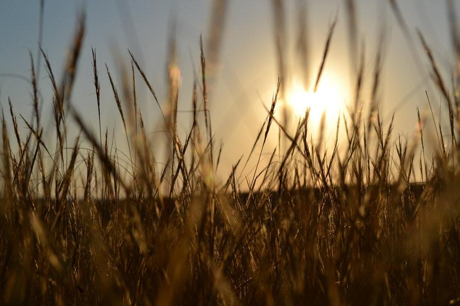 bereketli hilal'de tarım deneyi