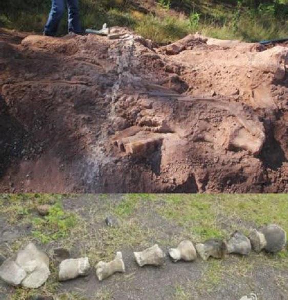çin'de sauropod bulundu