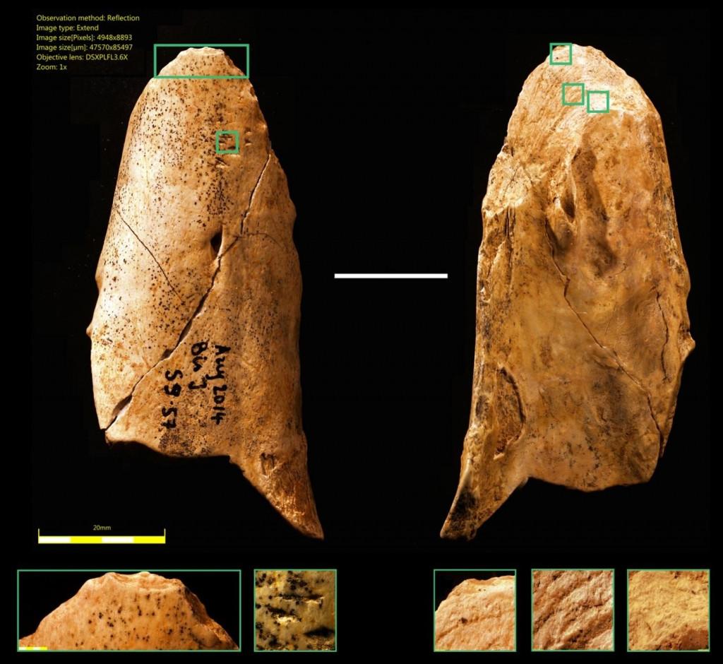 Neandertallerin Kullandığı İlk Çok İşlevli Kemik Alet Bulundu