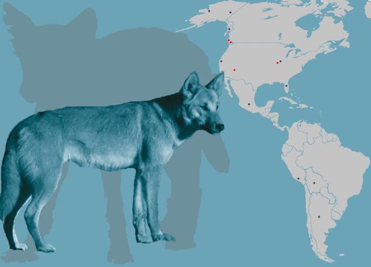 köpeklerin dünyaya yayılımı