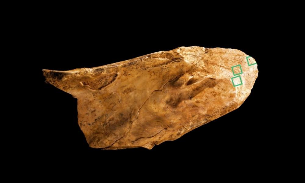 neandertallere ait 55 bin yıllık çok işlevli kemik alet bulundu