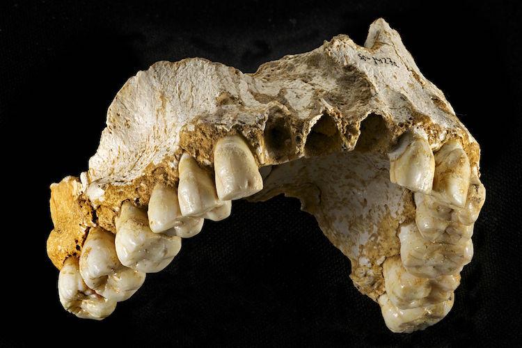neandertallerde cinsiyete bağlı iş bölümü vardı