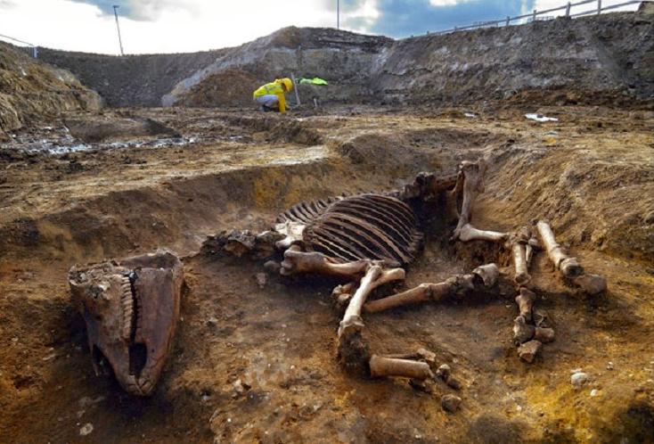roma dönemine tarihlenen çok iyi korunmuş at iskeleti