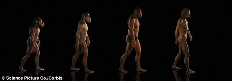 insana özel yürüyüş metatarsal