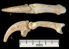 130,000 Yıl Önce Neandertaller Kartal Pençesinden Takı Yapmış