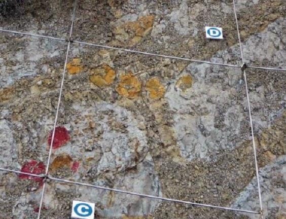 ispanya'da dinozor yumurtalarına zarar verildi