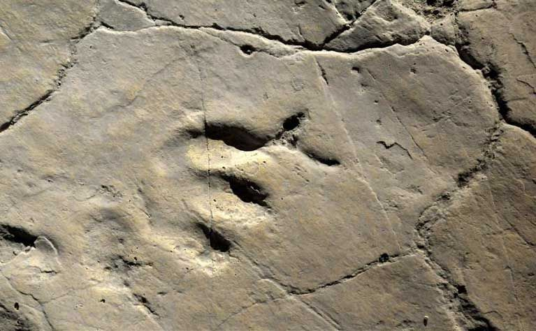 bolivya'da 10 bin dinozor ayak izi