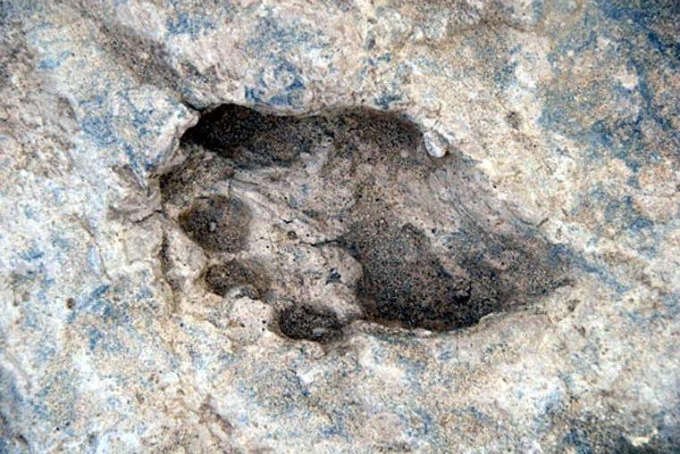 1,5 Milyon Yıllık Ayak İzleri Homo Erectus'un Nasıl Avlandığını Gösteriyor