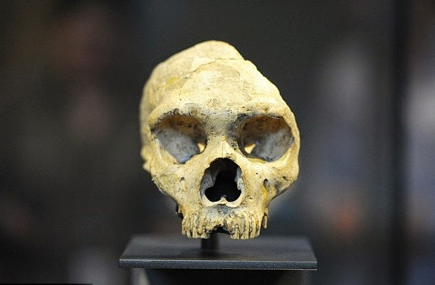 neandertaller bulaşıcı hastalıklar yüzünden yok oldu
