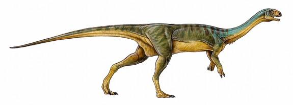 yeni vejeteryan dinozor türü bulundu
