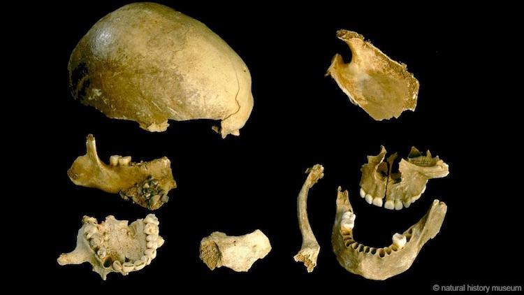 Modern İnsanlar 15.000 Yıl Önce Birbirini Yiyordu