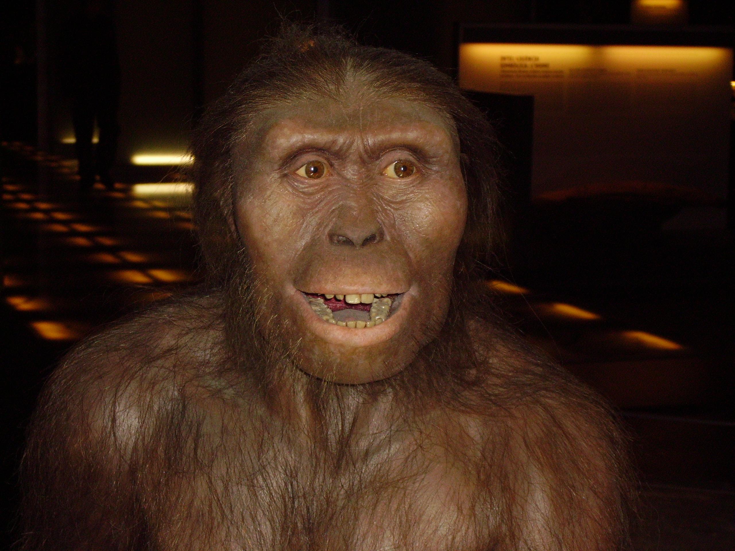 Australopithecus Afarensislerde Cinsiyet Arası Boyut Farkı Çok Azdı