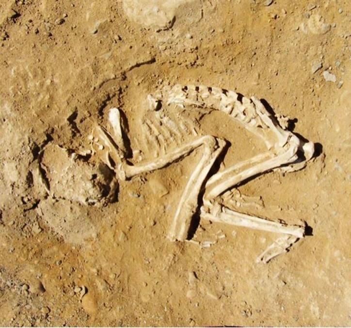 antik mısır'da hayvan sahibi olmak