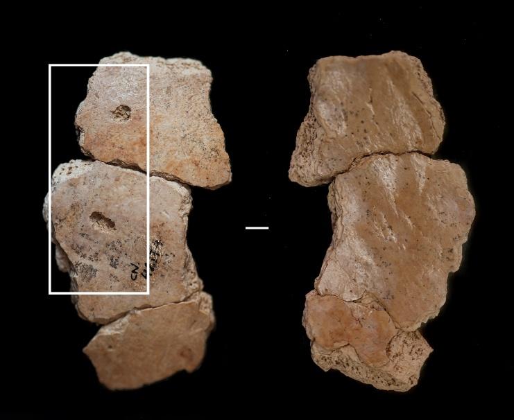 etobur hayvanlar neandertallere saldırıyordu