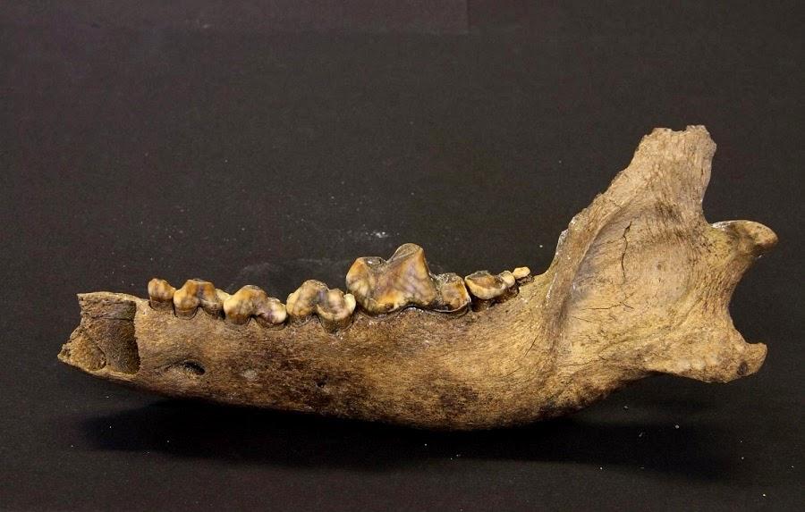 Köpeklerle Olan Bağımız 40.000 Yıl Önce Başlamış Olabilir