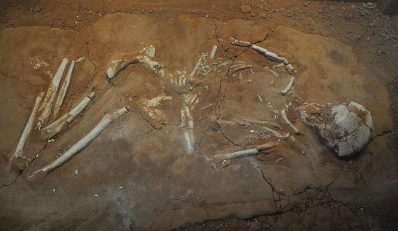 Passo Marinaro'dan tipik bir bükülmüş gömüt. Görsel: Carrie L. Sulosky Weaver, Regional Museum of Kamarina.