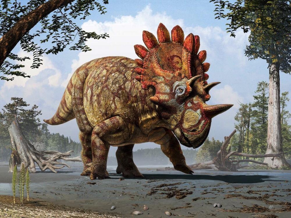 Regaliceratops peterhewsi dinozor