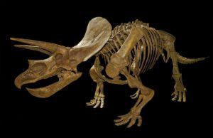 mezozoik dinozorlar ve kuşlar