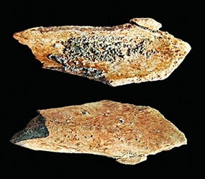 çin'de hominin fosilleri bulundu