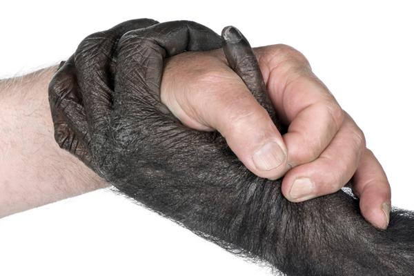 insan eli şempanze elinden daha az gelişmiş