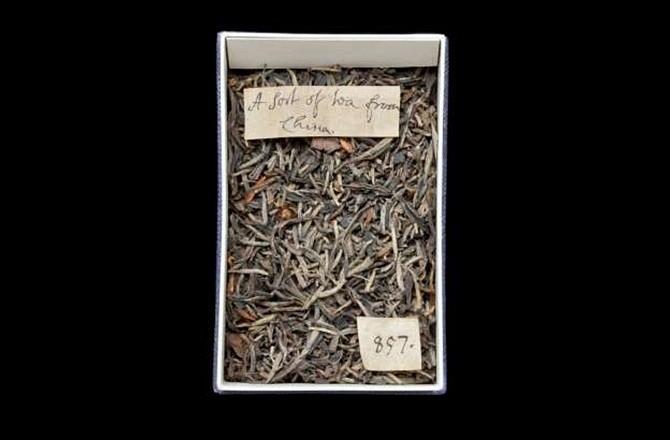 Londra'daki Doğal Tarih Müzesi'nde bulunan kurutulmuş çay yaprakları. (Natural History Museum/Queen Mary University of London)
