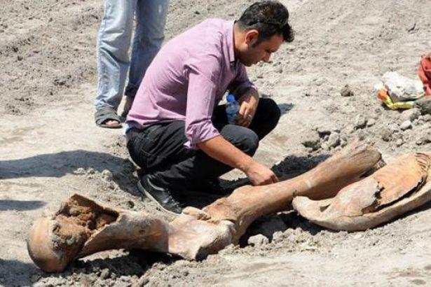 Kahramanmaraş'ta Tarla Süren Çiftçi Antik Fil Fosilleri Buldu