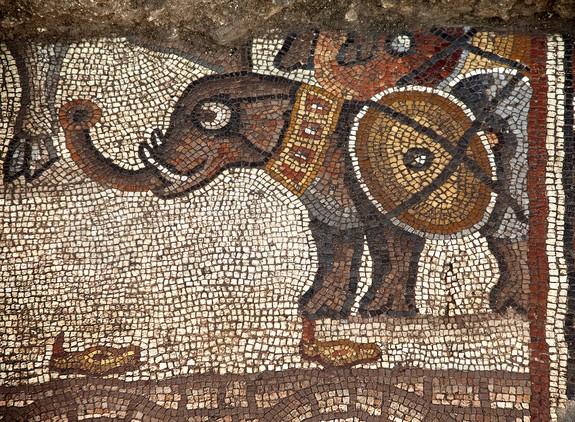 2013'te keşfedilen bir fil mozağini gösteren bölüm. Bu parça, 2015 Yaz aylarında ortaya çıkarılan büyük mozaiğin bir bölümü - Jim Haberman