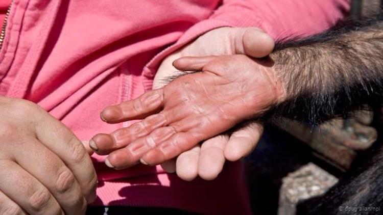 İnsan eli, şempanze elinden daha az gelişmiş. (Doug Allan/NPL)