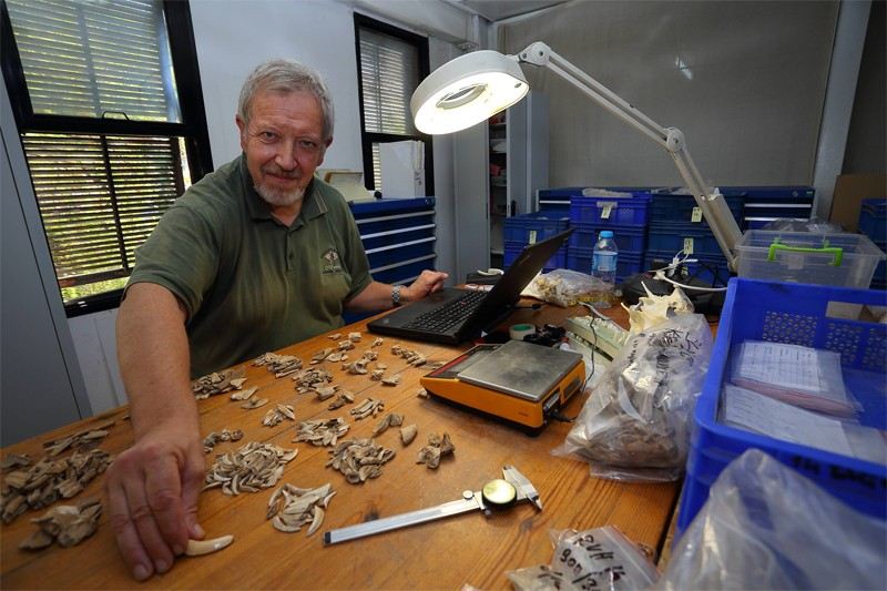Zooarkeologlar en ufak kemik parçalarını ve diğer hayvan kalıntılarını dahi kategorilendiriyorlar. (Fotoğraf: Avusturya Arkeoloji Enstitüsü)