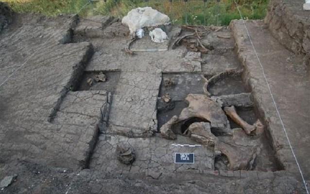 300,000 YIl Önce Öldürülmüş Fil İskeleti Bulundu