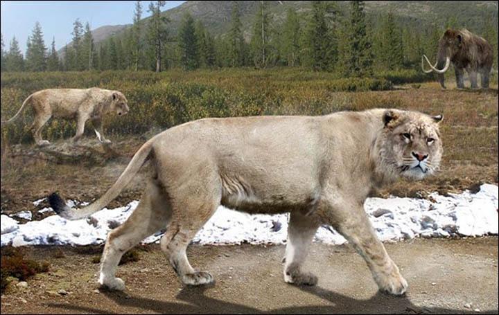 Bir sanatçının mağara aslanlarının nasıl göründüğüyle ilgili izlenimi.