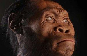 yeni insan türü homo naledi'nin infografik anlatımı