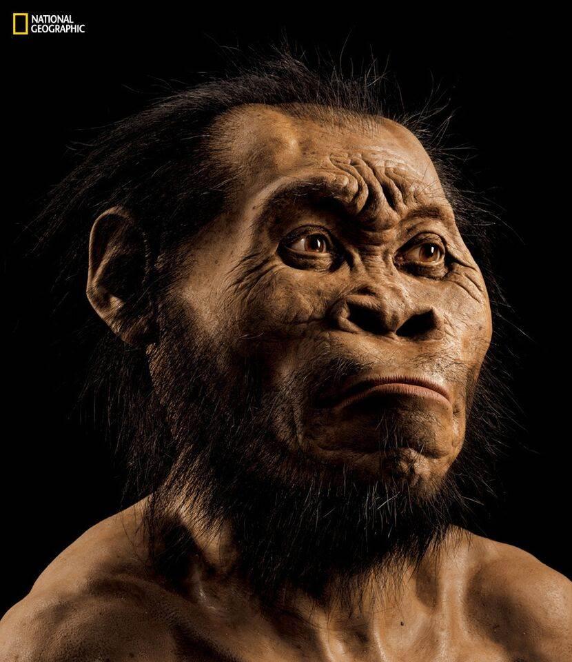 Güney Afrika'da Yeni Bir İnsan Atası Homo Naledi Bulundu