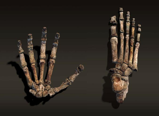 Yeni İnsan Atası Homo naledi Hakkında Bilmeniz Gereken 15 Şey