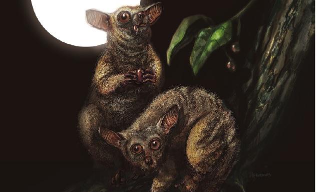 Kuzey Amerika'nın Son İnsan Olmayan Primatı Bulundu