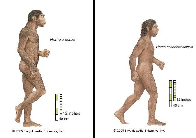 İnsan Vücudu 4 Başlıca Evrim Aşamasından Geçti