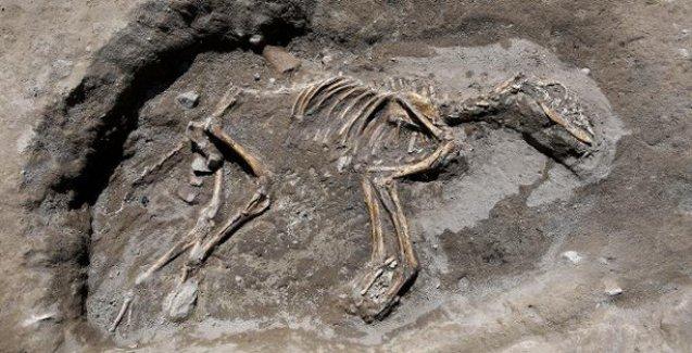 Van'da Ev İçine Gömülmüş 3000 Yıllık Köpek İskeleti Bulundu