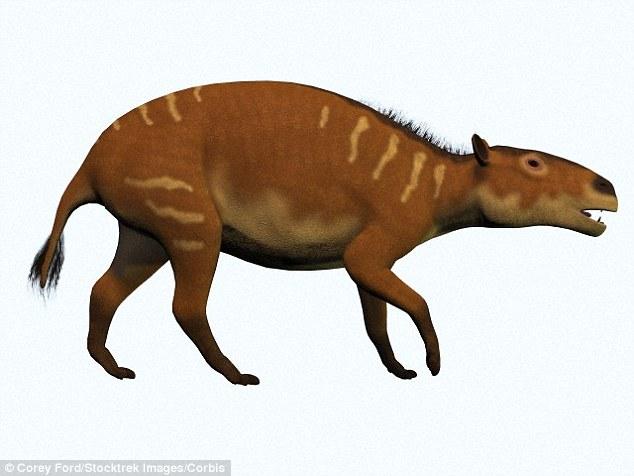 Almanya'da 48 Milyon Yıllık At ve Doğmamış Yavrusunun Fosili Bulundu