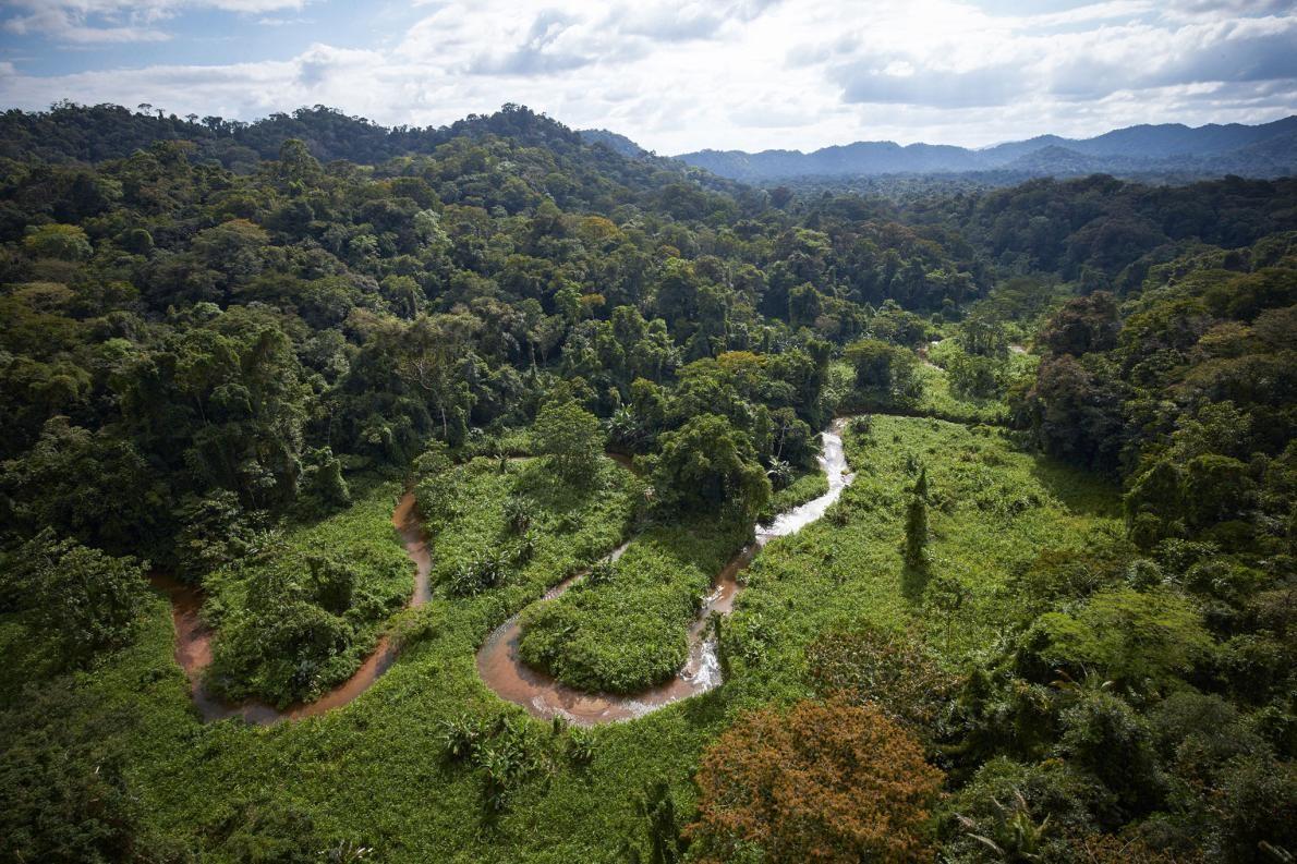 Geçen sene, LİDAR tarayıcısı ile orman örtüsünün altını derinlemesine inceleyen arkeologlar Honduras yağmur ormanlarında kayıp bir şehrin kalıntılarını keşfettiler. Fotoğraf: Dave Yoder, National Geographic