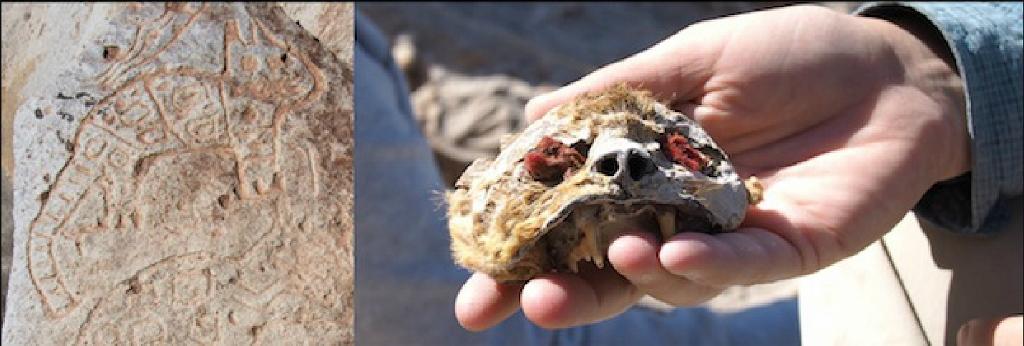Solda bölgedeki bir kaya üzeindeki kedigil betimi. Sağda, Uraca'da keşfedilen, gözlerine kırmızı kumaş konulmuş kesilmiş kedi kafası. (Görsel: Beth K. Scaffidi)