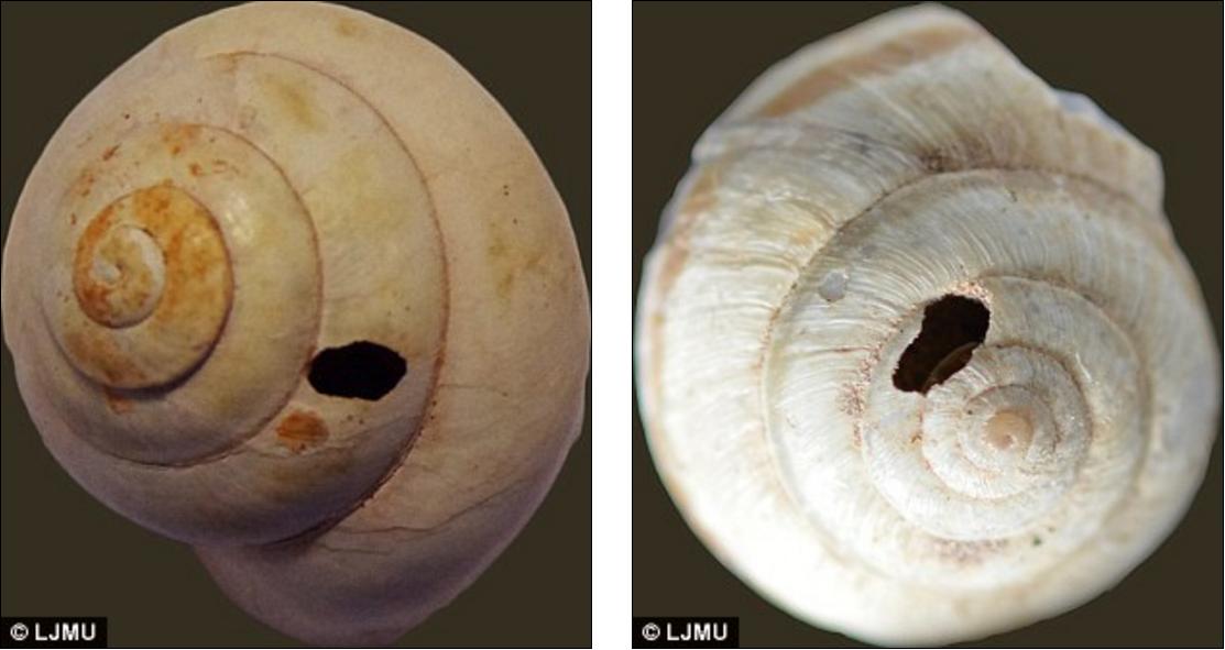 Libya'daki Erken İnsanlar 150,000 Yıl Önce Salyangoz Yiyordu