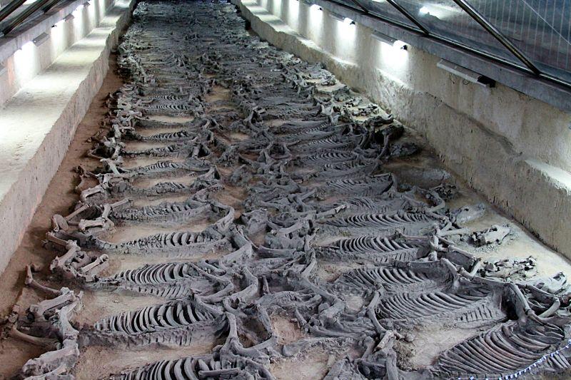 2500 Yıl Önce Çin İmparatorunun Yanında Gömülen 500 At Sergilenecek