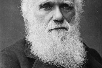 """Darwin'in """"Türlerin Kökeni"""" Kitabı En Etkili Akademik Kitap Seçildi"""
