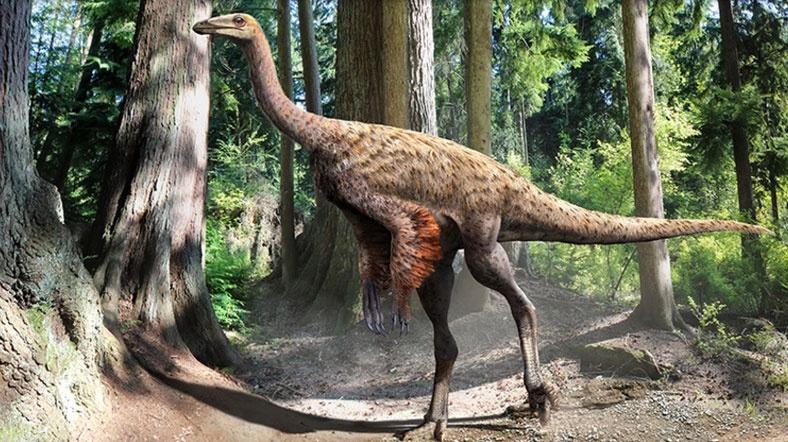Kretase döneminde yaşayan dinozor tüylerin gelişimi hakkında yeni bilgiler sunabilir. [Fotoğraf: Julius Csotonyi]