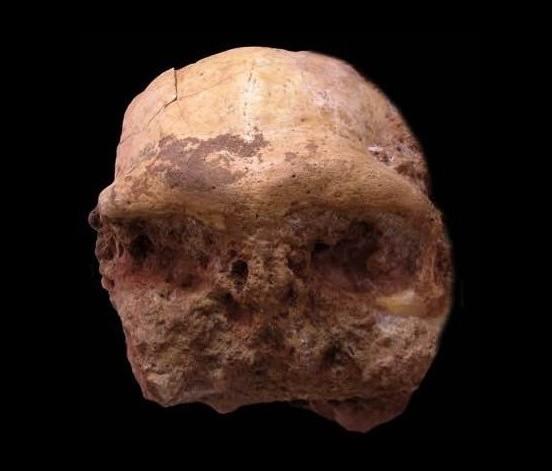 Doğu Çin'de Homo erectus Kafatası Bulundu