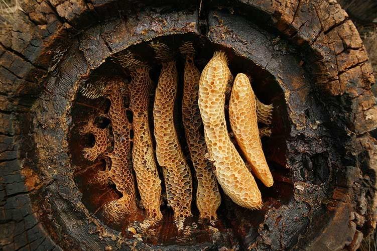 Çayönü ve Çatalhöyük'te Dünyanın En Eski Balmumu Kalıntısı Bulundu