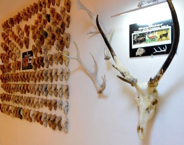 Marmaray Kazılarında Bulunan Binlerce Kemik İnceleniyor